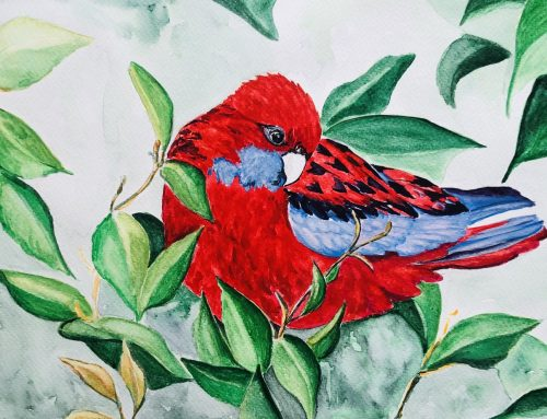 Bernadette, Crimson Rosella – A Watercolour Painting