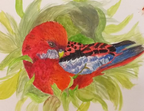 Glennis, Crimson Rosella – A Watercolour Painting