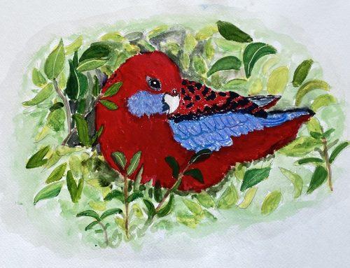 Shapeshifter – Australian Parrot – A Watercolour Painting